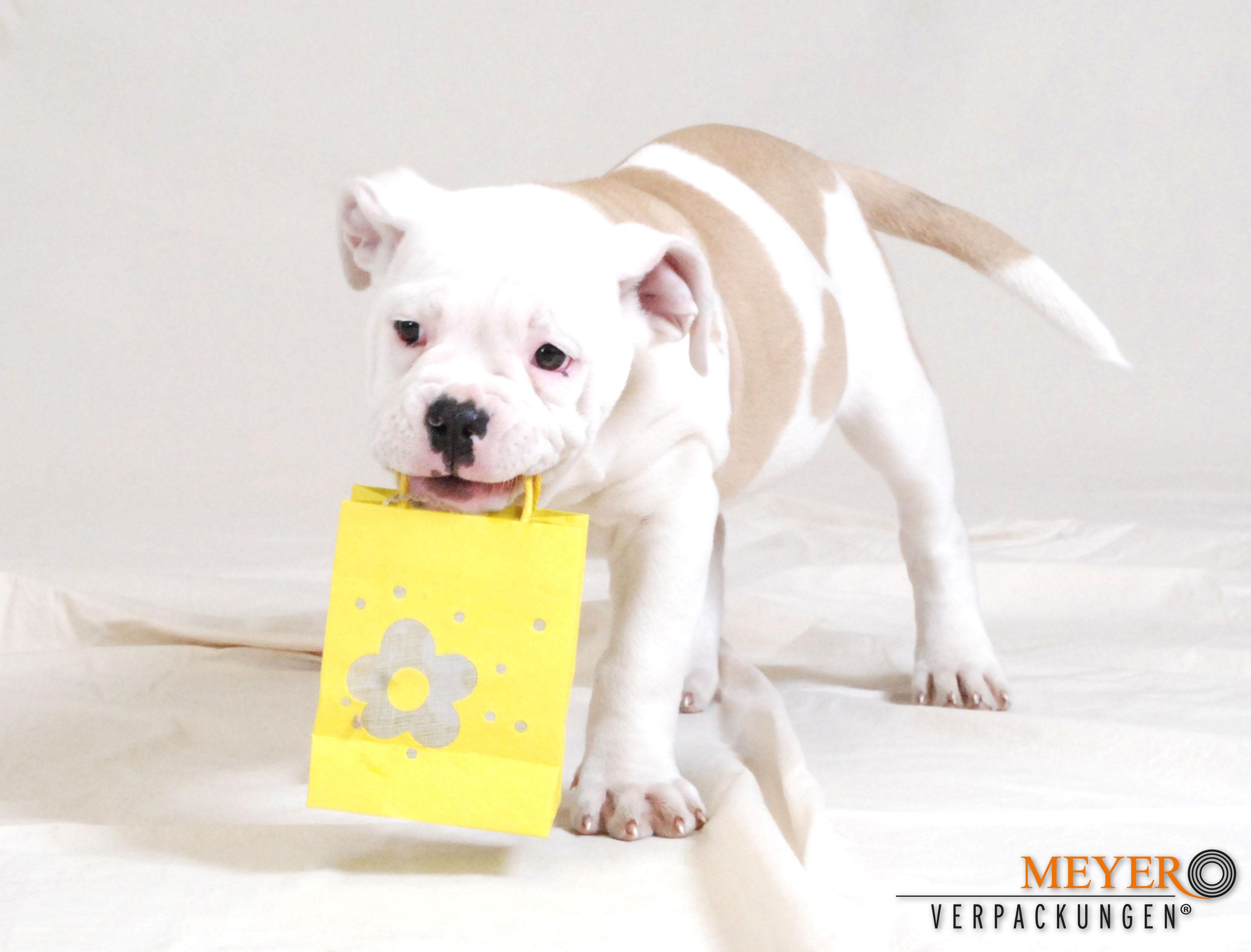 Hund mit gelbem Beutel