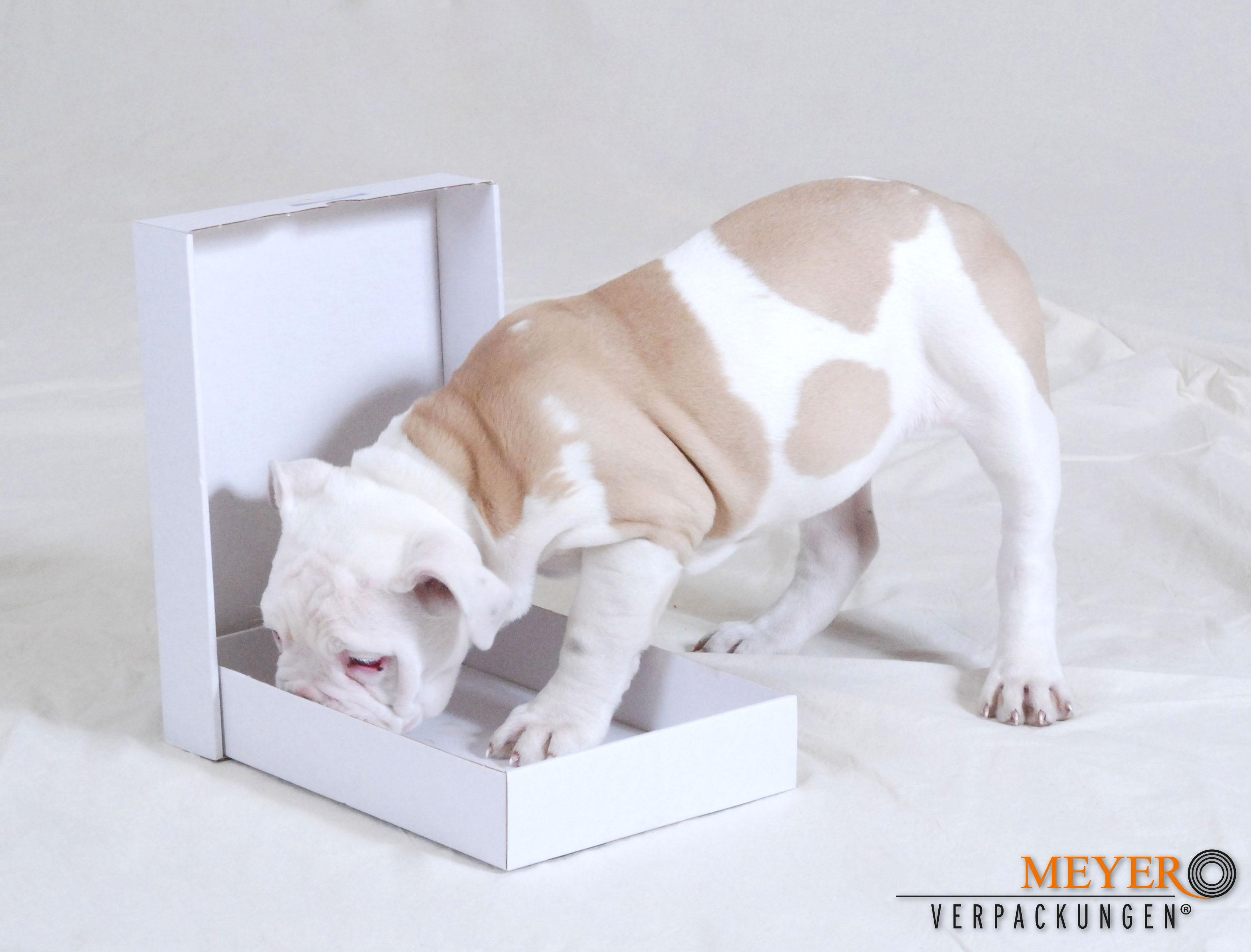 Hund mit pappschachtel